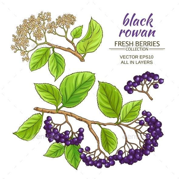 Black Rowan Set - Health/Medicine Conceptual