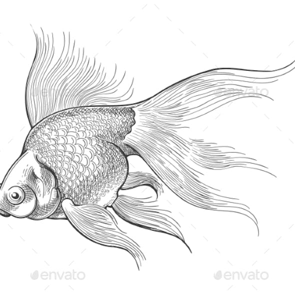 Goldfish Vintage Sketch