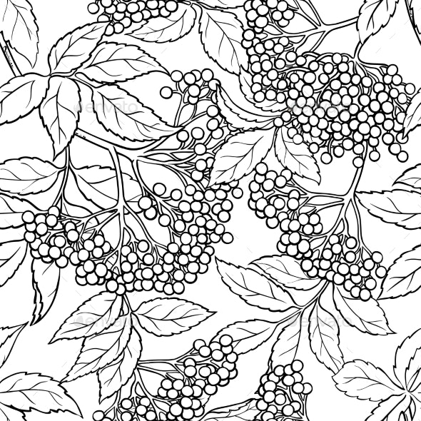 Elderberry Seamless Pattern - Health/Medicine Conceptual