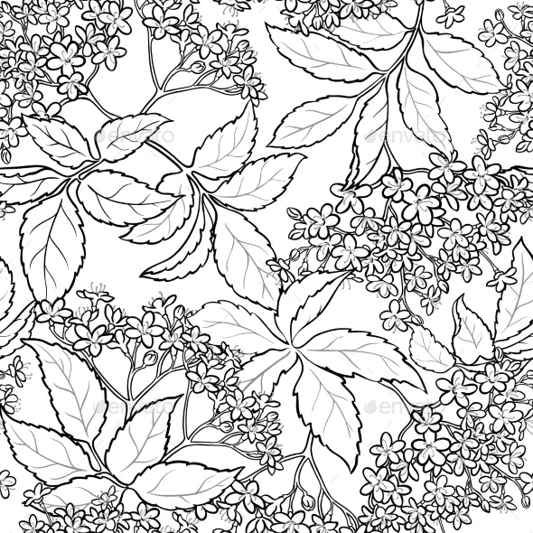 Elderflower Seamless Pattern - Health/Medicine Conceptual