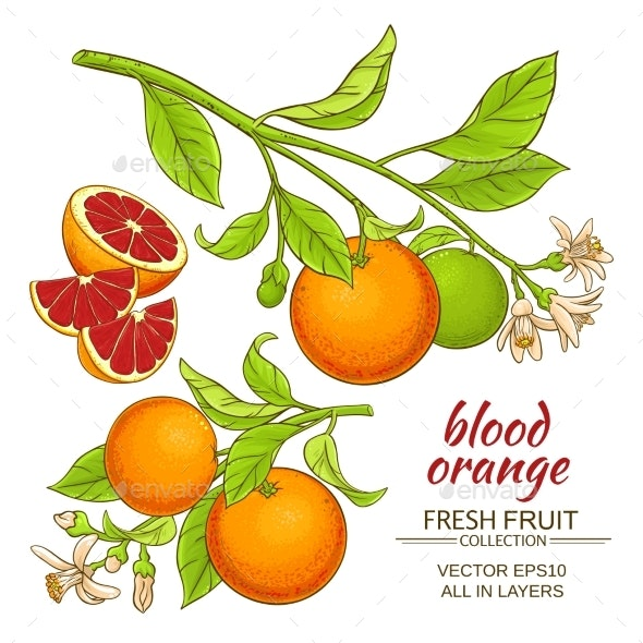Blood Orange Vector Set - Food Objects