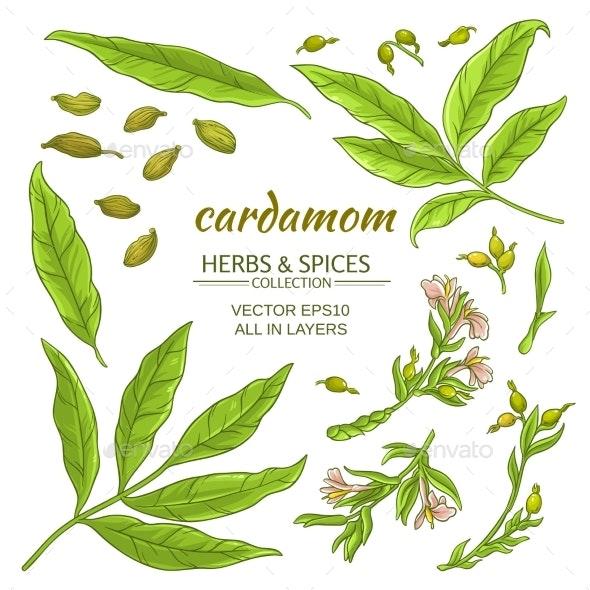Cardamom Elements Set - Health/Medicine Conceptual