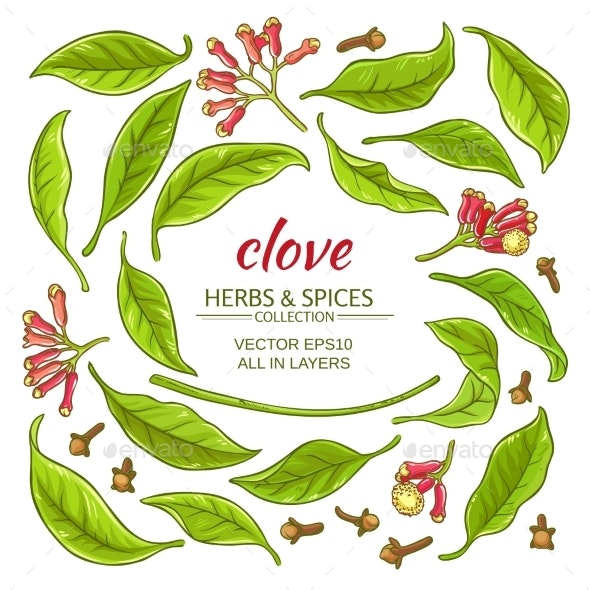 Clove Elements Set - Flowers & Plants Nature