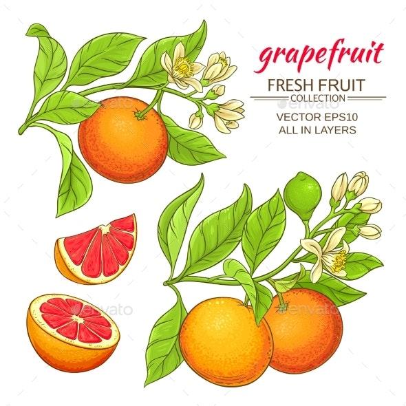 Grapefruit Vector Set - Food Objects