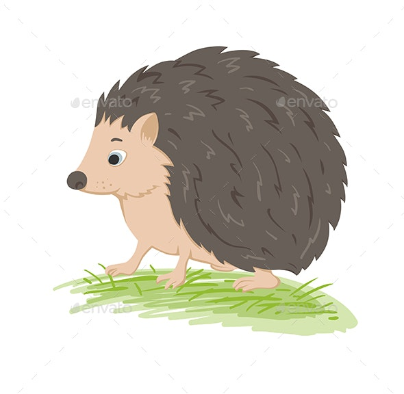 Forest Hedgehog on a Green Grass - Animals Characters