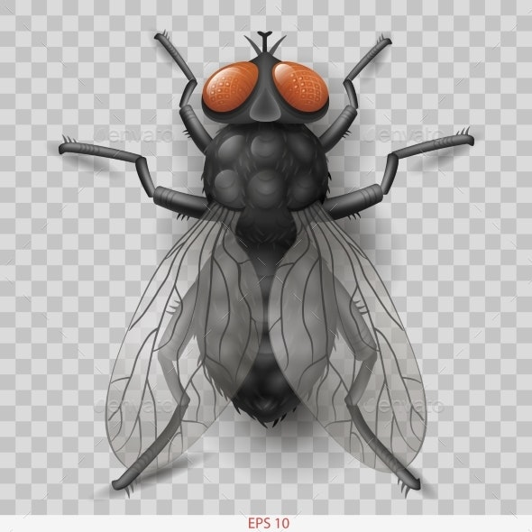 Realistic Insect Fly in Vector - Animals Characters