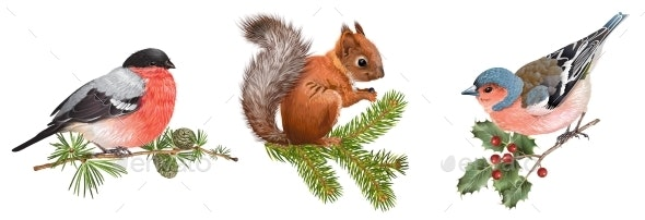 Winter Animals Set with Birds and Squirrel - Animals Characters
