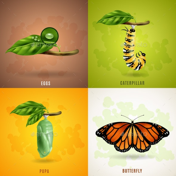 Butterfly 2x2 Design Concept - Animals Characters