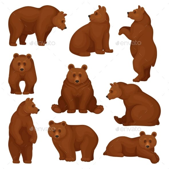 Flat Vector Set of Large Bear in Different Poses
