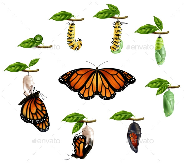 Life Cycle Of Butterfly Realistic Set - Animals Characters