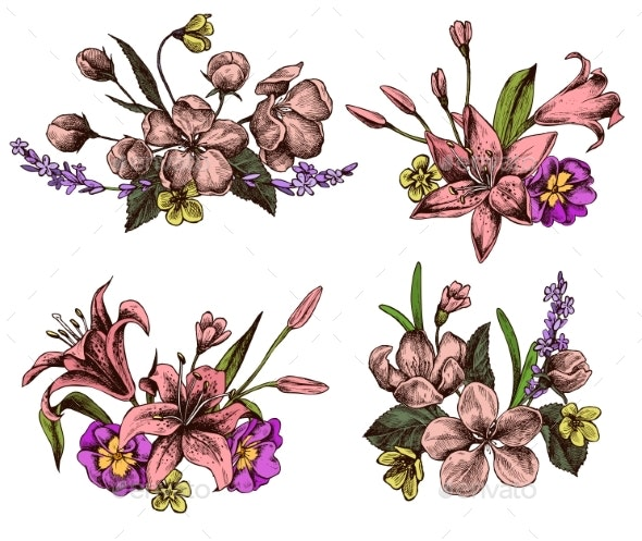 Vector Collection of Hand Drawn Lilies - Flowers & Plants Nature