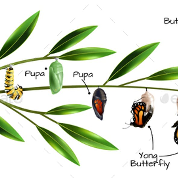 Butterfly Metamorphosis Composition