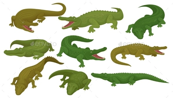 Collection of Crocodiles - Animals Characters