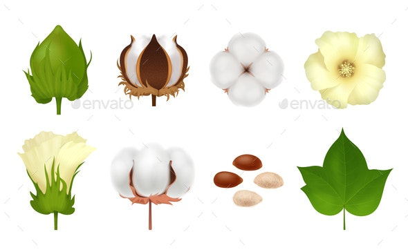 Cotton Realistic Icon Set - Flowers & Plants Nature