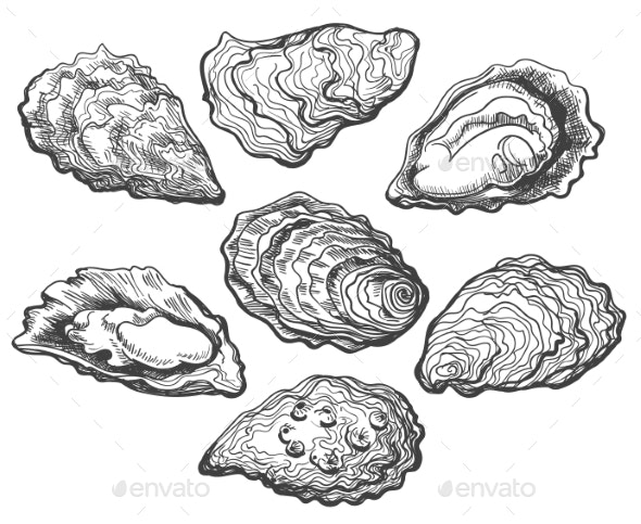 Oyster Shell Set - Food Objects