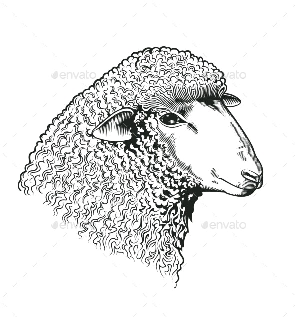 Head of Sheep Drawn in Engraving Style - Animals Characters