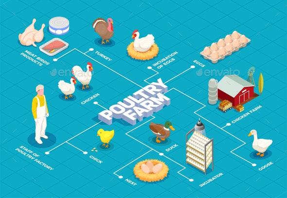 Poultry Farm Isometric Flowchart - Industries Business