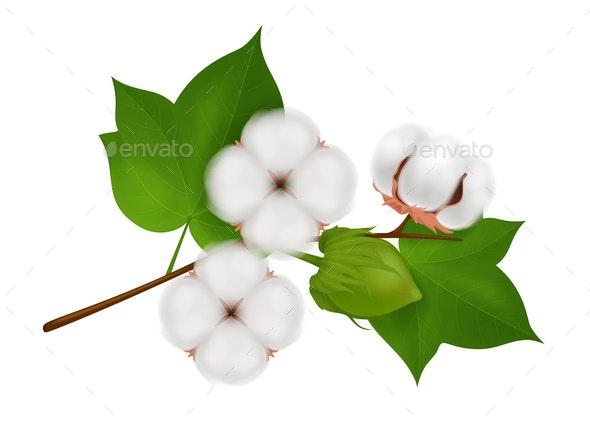 Cotton Flower Branch Realistic Composition - Flowers & Plants Nature