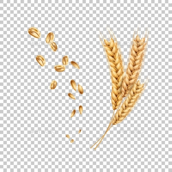 Vector Wheat Ears Spikelets Realistic with Grains - Food Objects