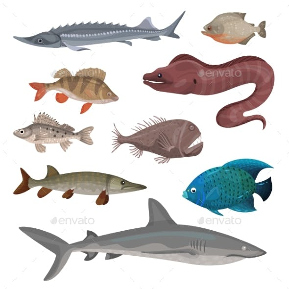 Flat Vector Set of Different Predatory Fishes