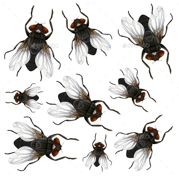 Fly on White Background - Animals Characters
