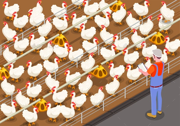 Poultry Isometric Background - Patterns Decorative