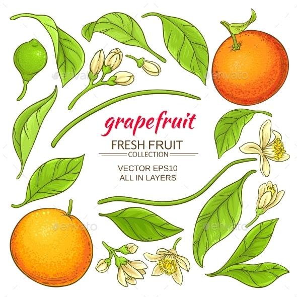 Grapefruit Elements Set - Food Objects