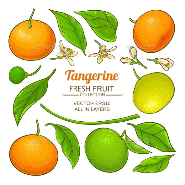 Tangerine Fruit Vector - Food Objects