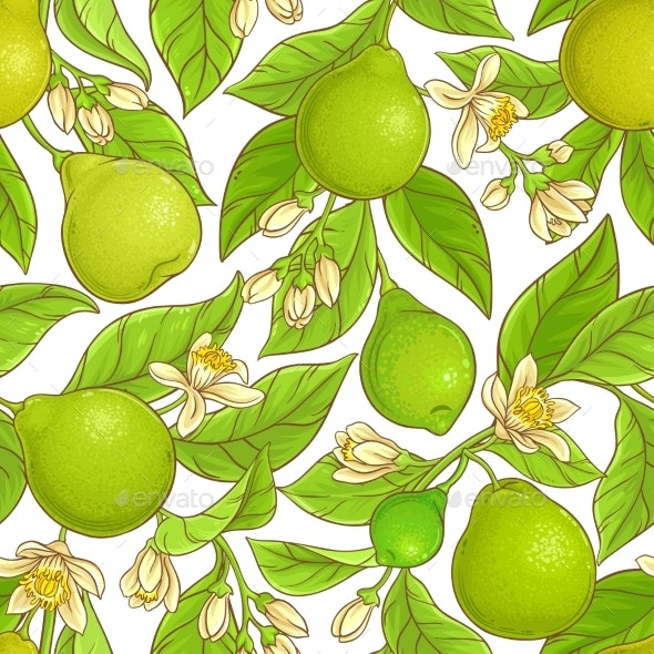 Bergamot  Vector Pattern - Food Objects
