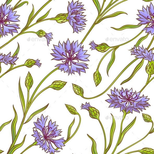 Cornflower Vector Pattern - Flowers & Plants Nature