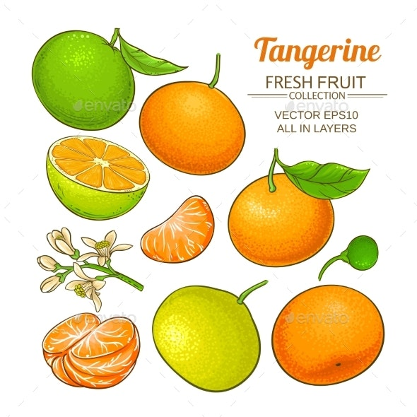 Tangerine Fruit Vector Set - Food Objects
