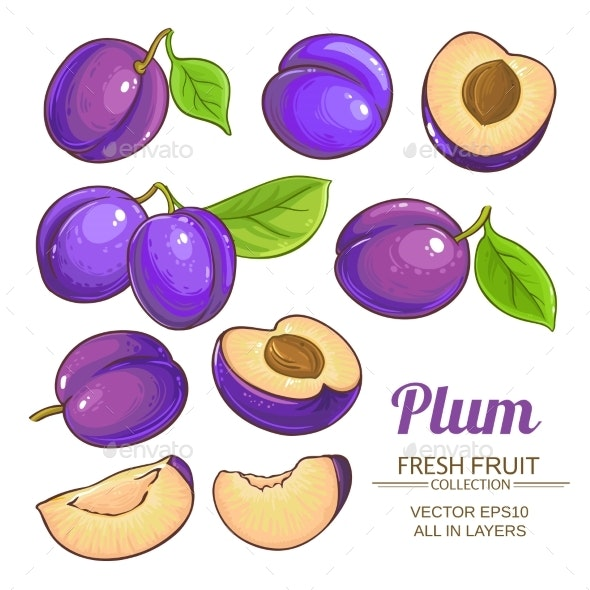 Plum Fruits  Vector Set - Food Objects