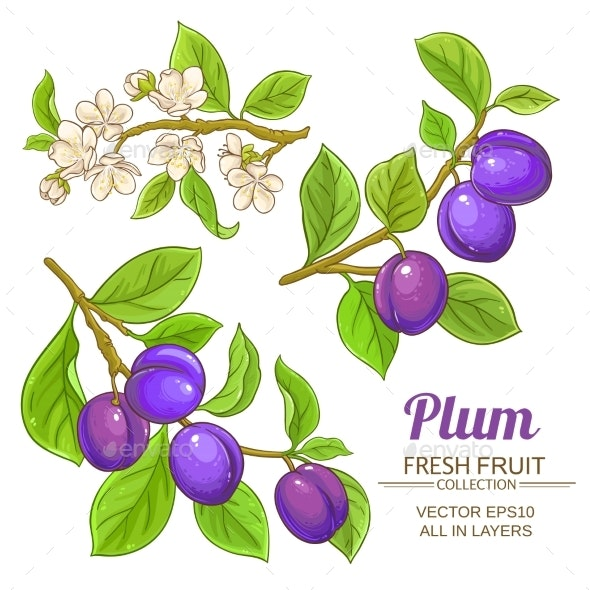 Plum Branches Set - Food Objects