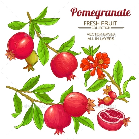 Pomegranate Branches Vector Set - Food Objects