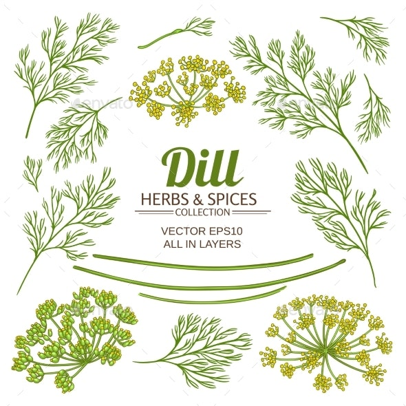 Dill Plant Elements Vector Set - Food Objects