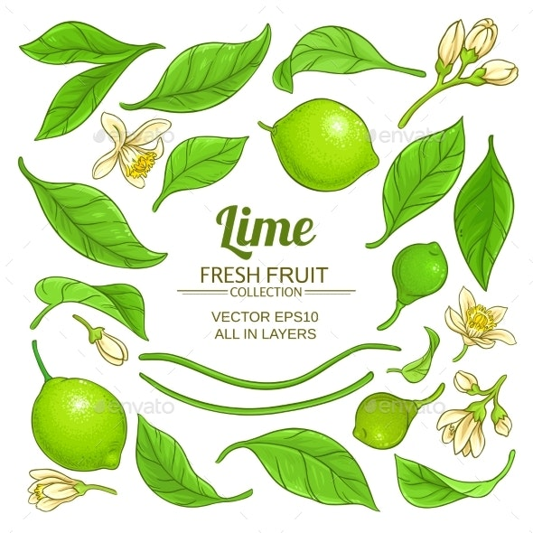 Lime Elements Vector Set - Food Objects