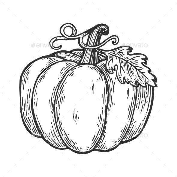 Pumpkin Engraving Vector Illustration - Miscellaneous Vectors