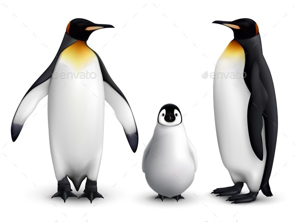 Penguin Realistic Set - Animals Characters
