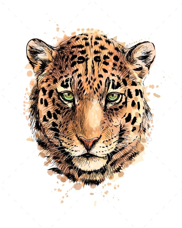 Portrait of a Leopard Head From a Splash of - Animals Characters