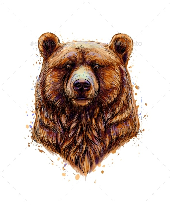 Portrait of a Brown Bear Head From a Splash  - Animals Characters