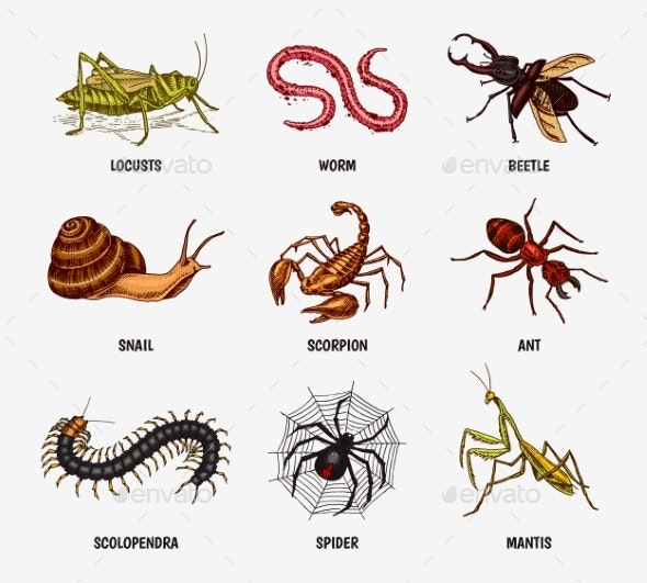 Set of Insects - Animals Characters