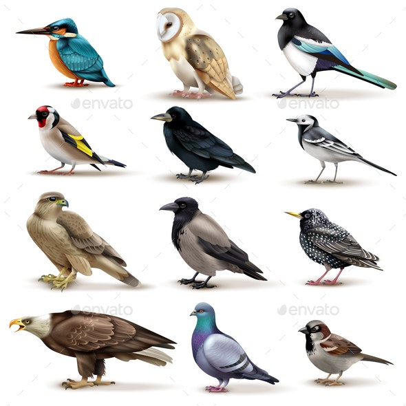 Birds Realistic Fauna Collection - Animals Characters