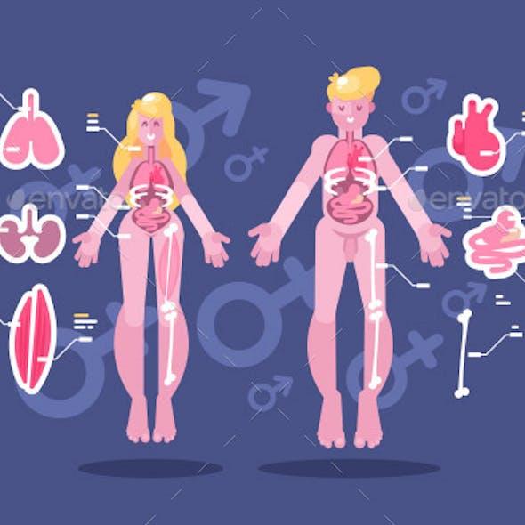 Anatomy of Human Body Flat Infographic