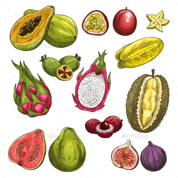 Vector Sketch Icons of Exotic Tropical Fruits - Food Objects
