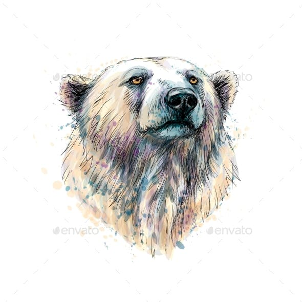 Portrait of a Polar Bear Head