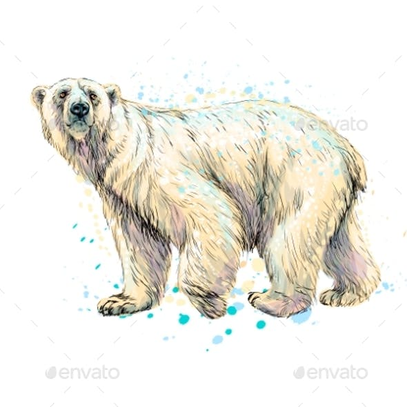 Abstract Polar Bear From a Splash of Watercolor