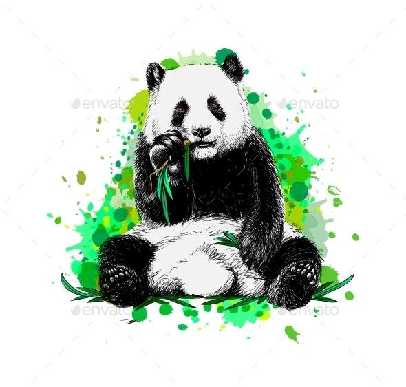 Panda Sitting and Eating Bamboo - Animals Characters