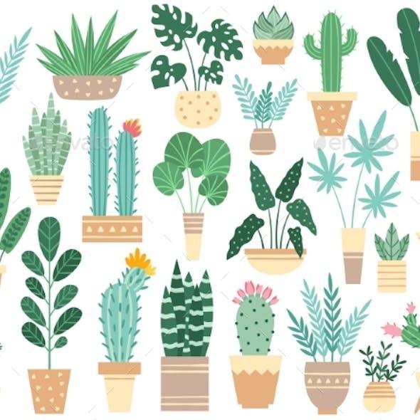 Home Plants in Pots. Nature Houseplants