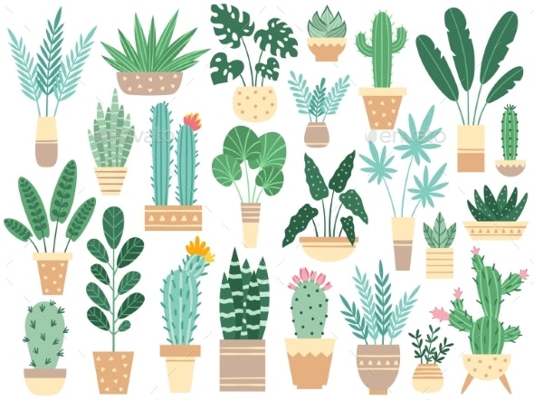 Home Plants in Pots. Nature Houseplants - Flowers & Plants Nature