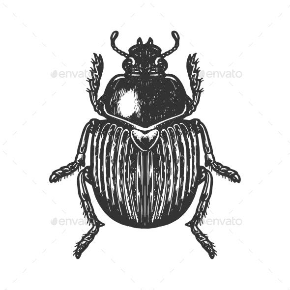 Scarab Beetle Engraving Vector Illustration - Miscellaneous Vectors